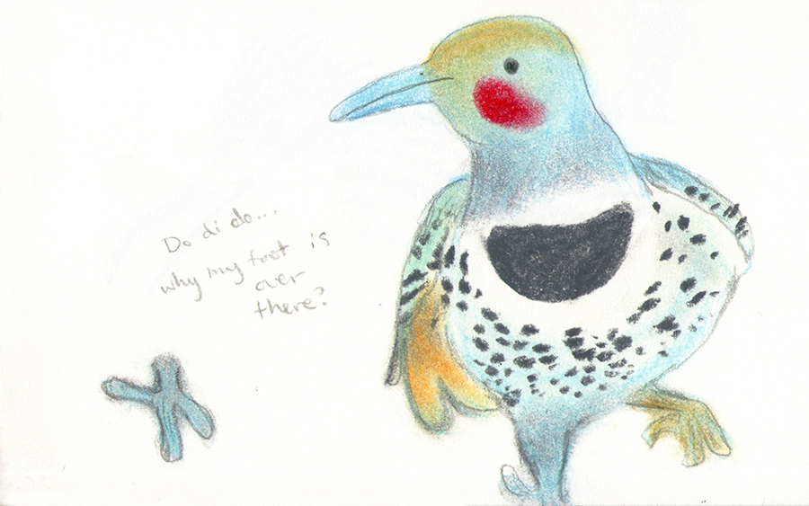 flicker bird charming soft pastel illustration