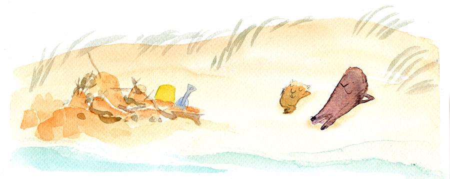 beachsamenweb